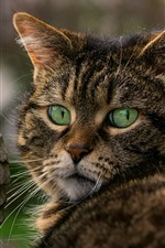 Preview iPhone wallpaper Green eyes cat, owl statue