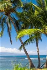 Preview iPhone wallpaper Hawaii, palm trees, sea, tropical, leaves, sky, USA