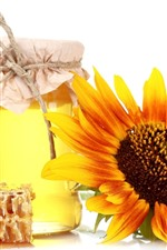 Honey, sunflower, white background