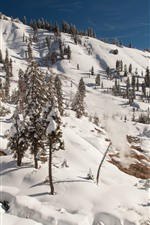 Preview iPhone wallpaper Lassen Volcanic National Park, trees, snow, winter, slope, USA