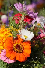Preview iPhone wallpaper Many flowers, white, yellow, orange, pink
