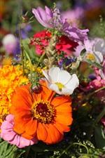 iPhone обои Многие цветы, белые, желтые, оранжевые, розовые
