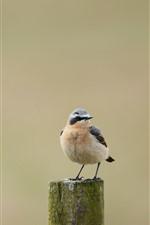 Um pássaro, toco de madeira