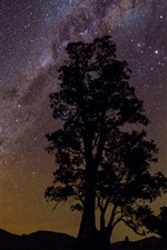 Preview iPhone wallpaper One tree, silhouette, starry, stars, night