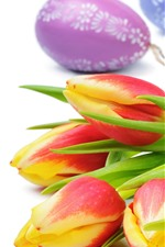 Preview iPhone wallpaper Orange tulips, flowers, Easter eggs, white background