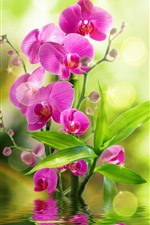 Preview iPhone wallpaper Pink phalaenopsis, green leaves, water, light circles