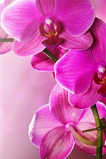Preview iPhone wallpaper Pink phalaenopsis, orchid, petals, stem