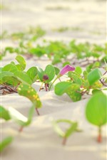 Preview iPhone wallpaper Sands, green leaves, flowers