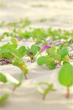 iPhone壁紙のプレビュー 砂、緑の葉、花
