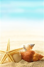 Preview iPhone wallpaper Starfish, shell, sands, sea