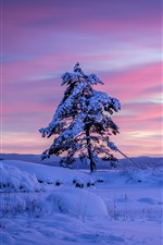 Preview iPhone wallpaper Sweden, lonely tree, snow, winter