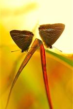 Duas borboletas, folhas de grama, luz de fundo
