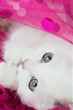 Preview iPhone wallpaper White kitten, cat, eyes, pink silk