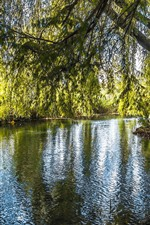 Preview iPhone wallpaper Willow, trees, river, green leaves, nature