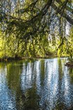 Salgueiro, árvores, rio, folhas verdes, natureza