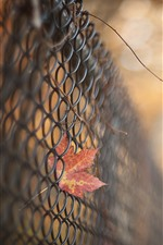 Preview iPhone wallpaper Wire fence, red maple leaf, hazy
