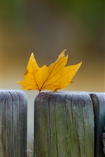 Preview iPhone wallpaper Yellow maple leaf, wood fence