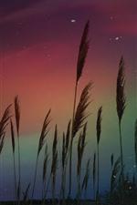 Preview iPhone wallpaper Aurora, reeds, stars, night