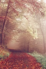Preview iPhone wallpaper Autumn, trees, forest, foggy, path