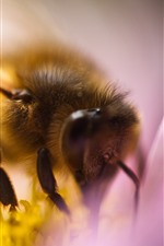 Preview iPhone wallpaper Bee macro photography, insect, flower, pollination