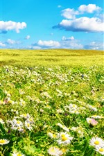 Preview iPhone wallpaper Chamomile, white flowers field, green grass, summer, sunshine, clouds