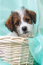 Preview iPhone wallpaper Cute puppy, basket, purple flowers