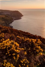 Preview iPhone wallpaper Exmoor National Park, sea, sunset, yellow flowers, UK