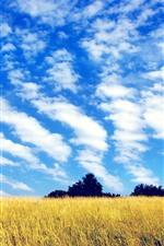 Campos, árvores, céu azul, nuvens