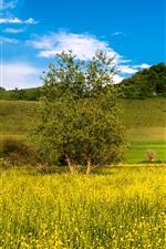 Campos, árvores, colina, céu azul