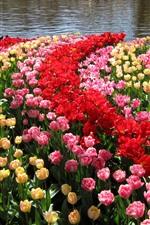 Нидерланды, Сады Кекенхоф, тюльпаны, пруд