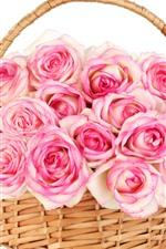Rosas cor de rosa, cesta, fundo branco
