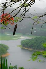 Preview iPhone wallpaper Puerto Rico, flowers, tree branch, mountains, river, fog