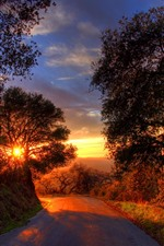 Road, trees, sunset, shadow