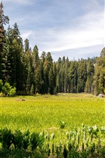 Preview iPhone wallpaper Sequoia National Park, trees, grass, green, USA