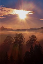 Preview iPhone wallpaper Sunrise, trees, fog, morning, nature scenery