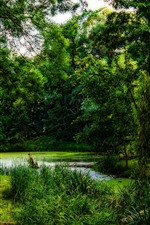 Preview iPhone wallpaper Trees, green, pond, nature scenery