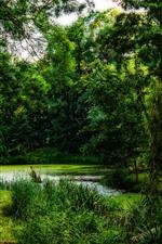 iPhone обои Деревья, зелень, пруд, природные пейзажи