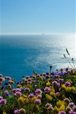 Preview iPhone wallpaper Wales, Irish Sea, Puffin Island, flowers, England