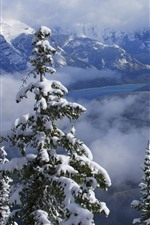 Preview iPhone wallpaper Banff National Park, mountains, winter, snow, trees, clouds, Canada