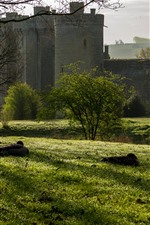 Preview iPhone wallpaper Bodiam Castle, England, grass, trees, ducks, sunshine