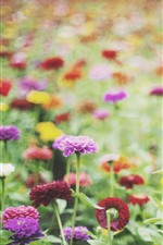 Preview iPhone wallpaper Different colors flowers, hazy