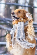 Preview iPhone wallpaper Dog, scarf, snow, winter