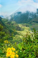 Preview iPhone wallpaper Ecuador, mountains, valley, fields, yellow flowers