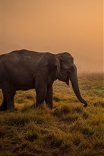 Preview iPhone wallpaper Elephant, grass, sunrise, morning