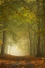 Preview iPhone wallpaper England, autumn, forest, trees, fog, path