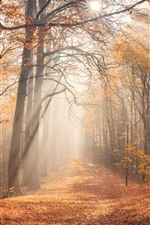 Preview iPhone wallpaper Forest, trees, sun rays, fog, morning, autumn