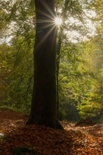 Preview iPhone wallpaper France, Brittany, trees, forest, autumn, leaves, sun rays