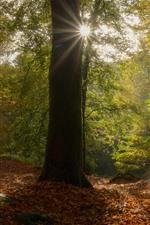 Франция, Бретань, деревья, лес, осень, листья, солнечные лучи