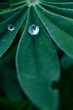 Preview iPhone wallpaper Green leaf, water droplets, dew, hazy