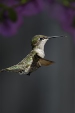 Preview iPhone wallpaper Hummingbird, flying, wings, beak, focus, flowers